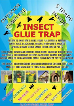 Insect Glue Trap 10 Pack|