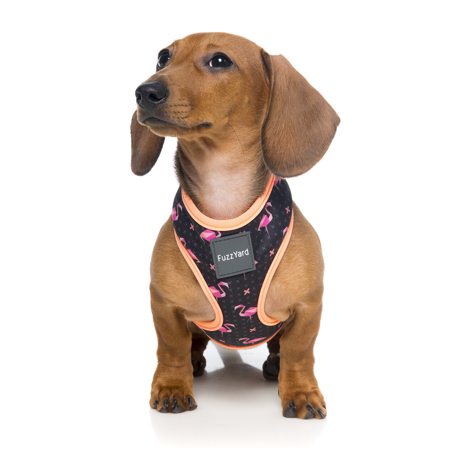 Fuzzyard Fabmingo Dog Harness Small