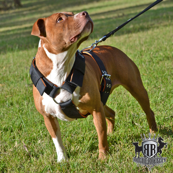 Rogue Royalty SupaTuff Heavy Duty Harness Black Large
